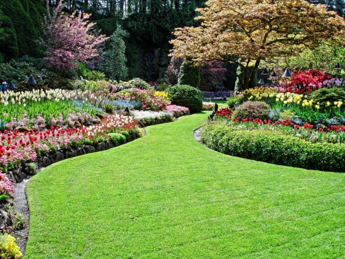 atlanta-jardinero_servicios
