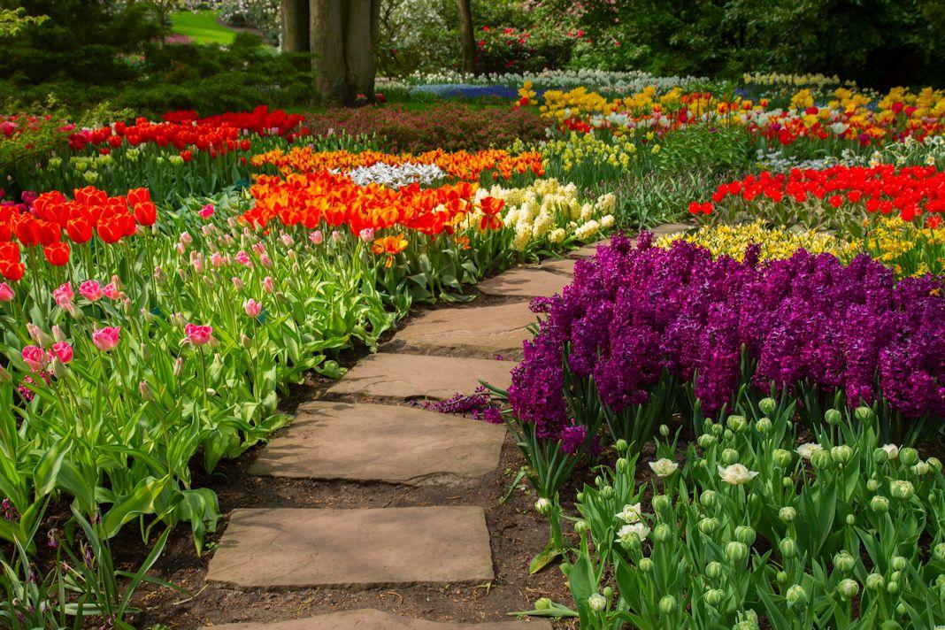 servicios-profesionales-jardineria-alpharetta