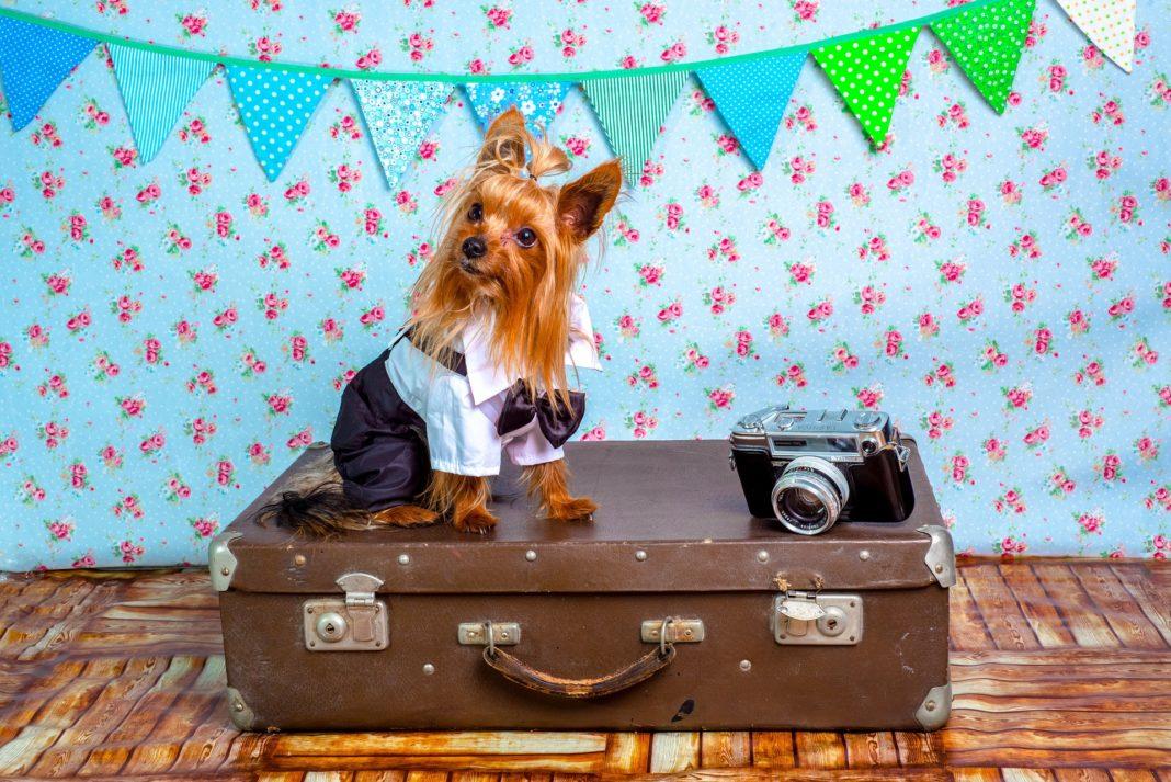 mascota-adecuada-atlanta-viajo-con-mi-cachorro