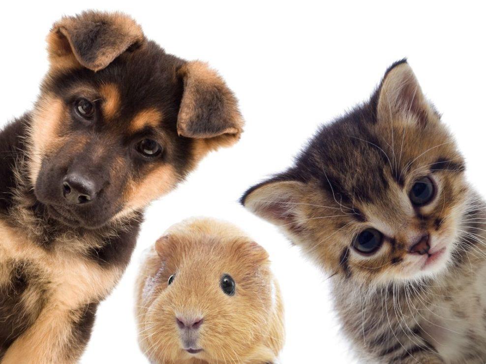 tips-para-eligir-mascota-adecuada-consejos